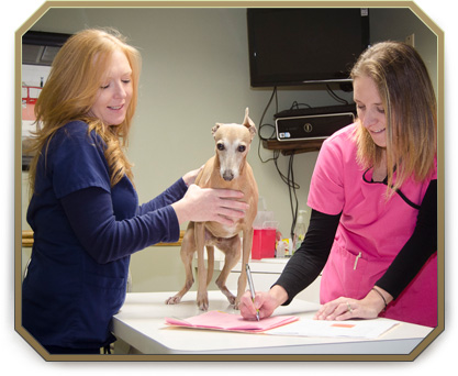 Wellness Exams for Pets in Slidell, LA